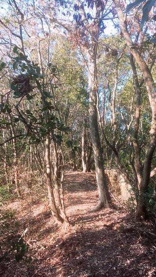 小笠山トレイル