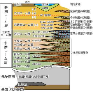 秦野盆地の地層模式図
