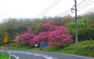三瀬峠から佐賀県佐賀市へ続く道。 三瀬どんぐり村付近です。
