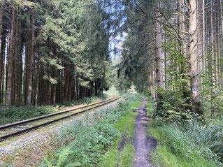 an den Waldbahn-Gleisen entlang