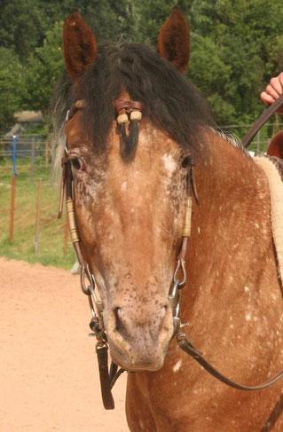 Mein liebes Pferd Amy
