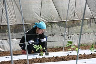 シオリちゃんのナス苗植え 2016/05/07