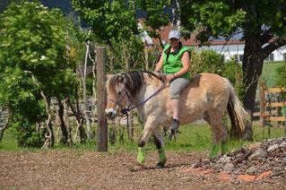 Auch ältere Pferde (hier Haifa 29) haben ein Anrecht auf Altersentsprechende Förderung