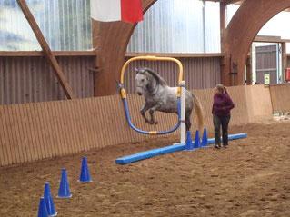 Fächerübergreifendes Training - Horse Agility
