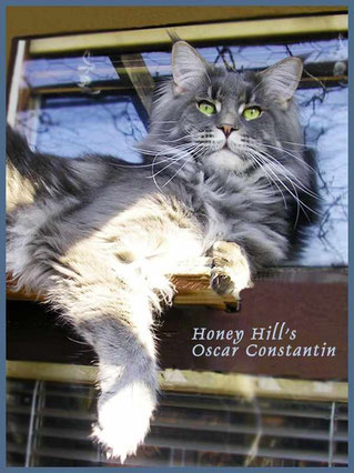(N)Honey Hill`s Oscar Constantin