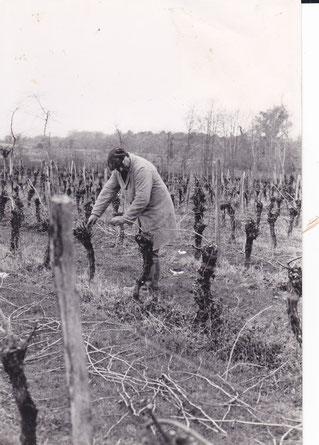 Roger lacave taille sa vigne pour la fabrication de l'Armagnac