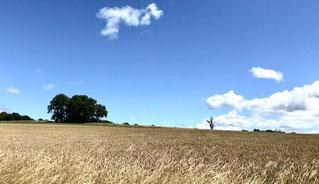 Endlose Getreidefelder