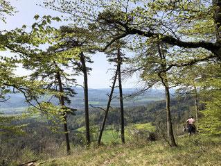 Blick auf die Bergmatte Dittingen