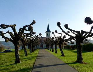Baumallee zur reformierten Kirche beim Parkplatz