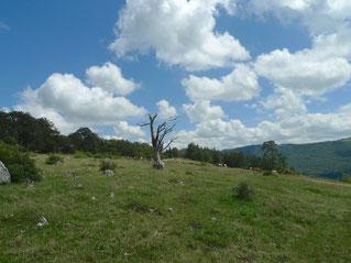 Oben auf dem Berg östlich der Lage de Soulce