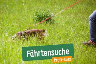 Hund sucht im hohen Gras