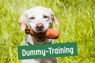 Hund mit Dummy im Maul