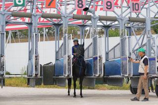 渡邊竜也騎手によるゲート入り練習