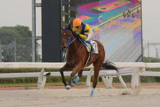 笹野博司調教師の地方競馬通算700勝を達成した「パキラパワー号」 鞍上は池田敏樹騎手
