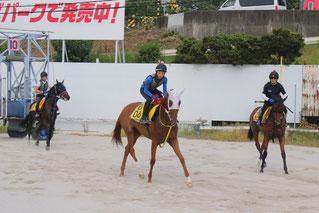 枠入り練習を見せてくれた佐藤友則騎手(右)水野翔騎手(中)加藤聡一騎手(愛知・左)