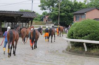 各馬、新たな厩舎に向かいます
