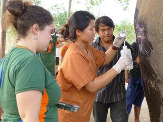 Manejo clínico y rehabilitación de fauna silvestre