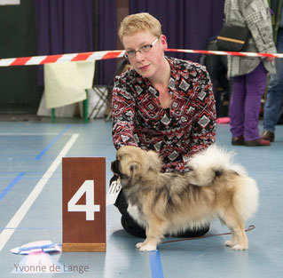 VIERDE BEST IN SHOW PUPPY CANDY