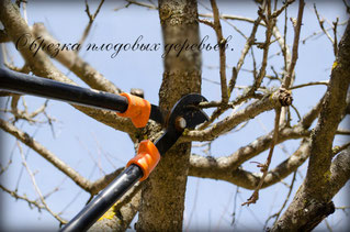 обрезка плодовых деревьев
