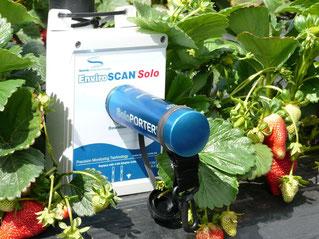 logger Solo Porter installé dans un plant de fraisiers - facile à installer avec Agralis