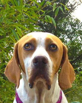 Elliot der Hund mit Charakter