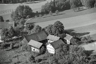 1963 Tobias Knechtelsdorf