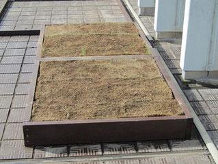 フエルトの上に芝生を置く