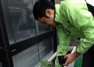 苗の植えつけ