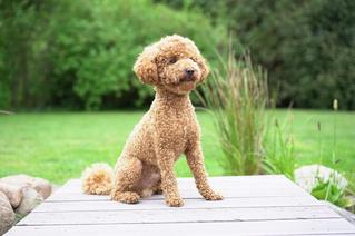 Hund folgt draußen den Signalen Sitz und Bleib