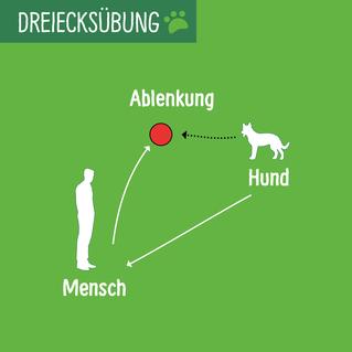 Mensch-Hund und Ablenlung bilden ein Dreieck