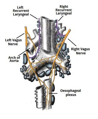 vagus nerve tract