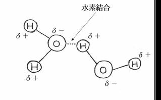 図6.水素結合
