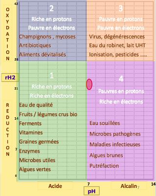 les milieux bioélectroniques