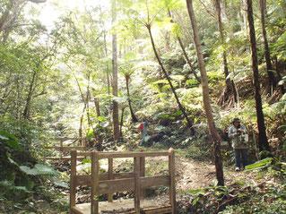 ハイキングコース(沢コース)
