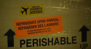 Faster but costlier. Are airlines delivering a better service than vessels in the perishable transport business? – photo: hs