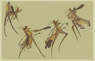 """Il disegno di Leo Matsuda dal titolo: """"studies of grasshopper playing baseball""""."""