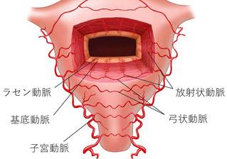 子宮内膜の血液