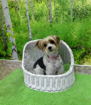 Salonhund Hippi freut sich auf Ihren Besuch