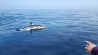 Delphin, Delfin, an der Algarve, Delphintour, zu den Delfinen raus fahren