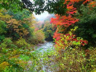 紅葉の見ごろは11月下旬~12月上旬がお勧め