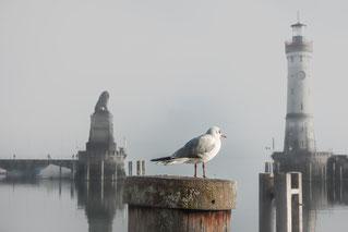 Hafeneinfahrt Lindau (Quelle pixabay)
