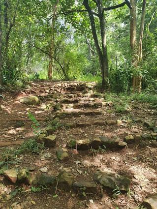 Treppe im Nairobi Arboretum
