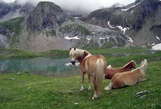 Pferde Wiese Gras Berge Wolken See Alpen Österreich Memminger Hütte Zams