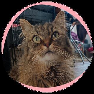 Visites à domicile pour chat sur Nantes et St Herblain