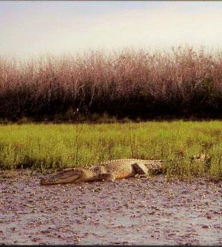 Beste Reisezeit Kakadu Nationalpark Australien