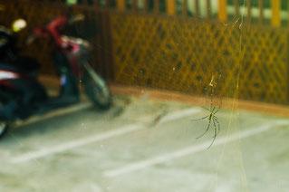 Огромный плотоядный паук, подкарауливающий жертв прямо у ресепшена отеля (опустим тот факт, что все пауки плотоядны ;). Размах его лап --- четверть метра.