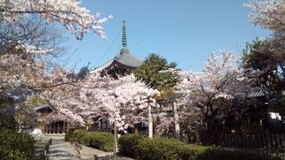 Honpou-ji in Nishijin