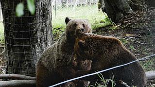 Besuch im Bärenreservat