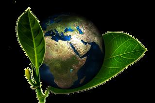 Die Ätherischen Öle von Gardien 9 kommen aus verschiedenen Teilen dieser Welt: Vietnam, Nepal, Tunesien, Spanien, Italien, Australien, Indonesien