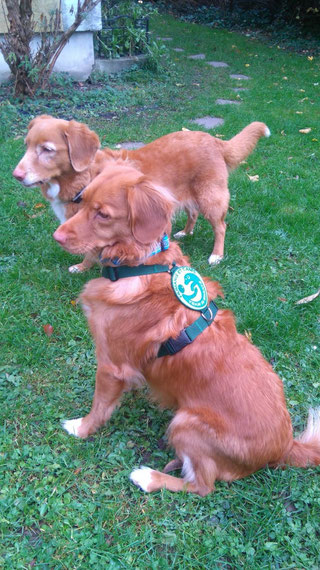 Fena als fertig ausgebildeter Therapiehund bei HeC